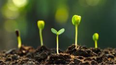 seedlings-growing.
