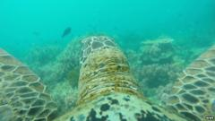 Turtle's view of Great Barrier Reef