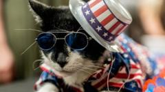 A-cat-with-a-blue-red-and-white-top-hat-and-blue-sunglasses.
