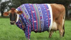 cow-in-a-christmas-jumper.