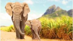 elephants-walking.