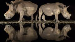 3rd Place; WILDLIFE CATEGORY