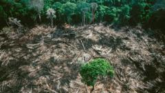 deforestation-as-tree-stands-alone-in-a-logged forest.