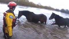 horse-rspca