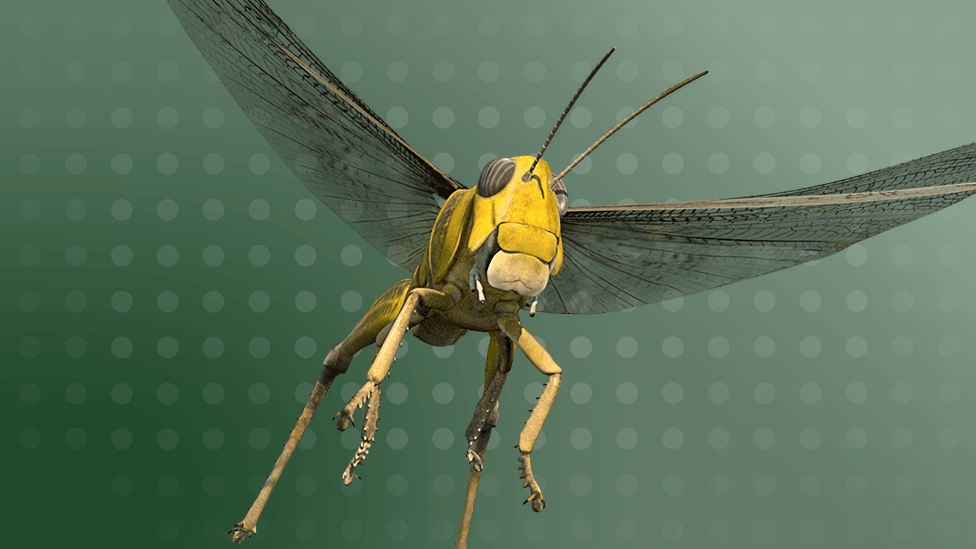 Illustration of a flying locust