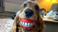 A dog that looks like it has false teeth.