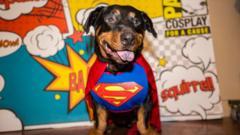 dog-dress-up
