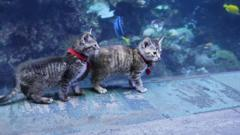 two-kittens-in-aquarium.