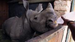 Lofo the rhino