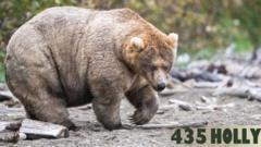 Holly-fattest-bear.