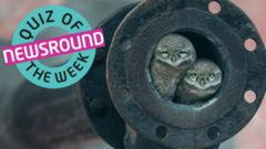 Two owl chicks sitting inside a pipe.