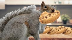 Squirrel in kitchen