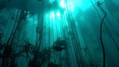 Kelp forest underwater.