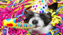 dog-in-a-hat-with-party-blower.