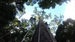 Tree shown with harnesses hanging from it