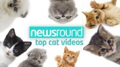Newsround's top cat videos