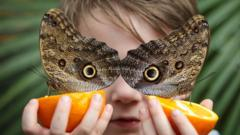 Owl-butterfly-with-a-child.