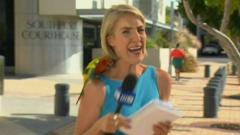 Lola the parrot makes a surprise TV appearance.