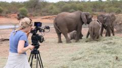 Filming elephants