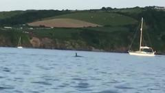 An orca in the sea