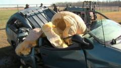 A big pumpkin is dropped on a car