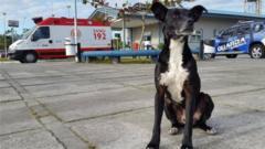 Região Notícias - Negeo the dog