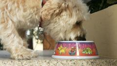 File image of dog eating from bowl