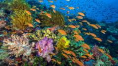 Coral reef featured in Blue Planet II