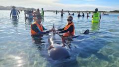 Volunteers saving whales