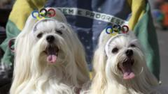 dogs at carnival