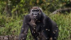 gorilla-through-butterflies.