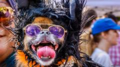 Dog in Halloween costume, part of the 27th Annual Tompkins Square Halloween Dog Parade was held on October 21, 2017