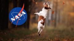 dog jumping nasa