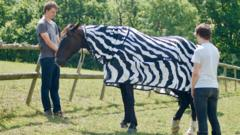Horse in Zebra outfit