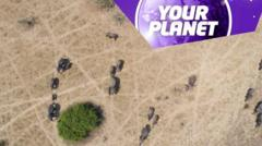 Elephants from above and the your planet logo