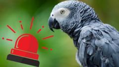 Parrot alarm