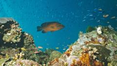 The-Great-Barrier-Reef-is-in-'very-poor'-condition