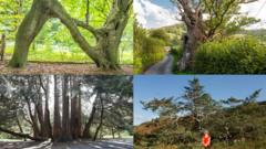 UK's Tree of the Year winners.