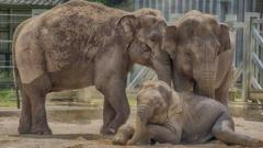 Three elephants at Twycross Zoo