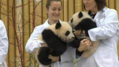 Panda cubs born in Toronto Zoo named