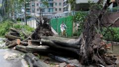 Man rides a bike sharing service bicycle past uprooted trees that have been cut after Typhoon Mangkhut hit Shenzhen