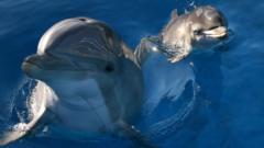 bottlenose dolphins.