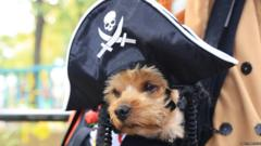 A puppy dressed as a pirate in a skull and crossbones hat