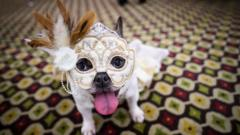 dog in a masque outfit