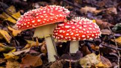 Red and white mushrooms in the woods