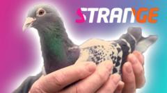strange pigeon