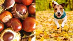 conkers-and-dog.