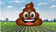 A poo emoji sat on crops