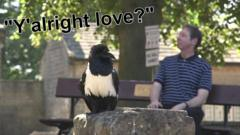 "A black and white raven with text saying ""Y'alright love"""