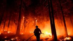 firefighter in Sequoia forest.